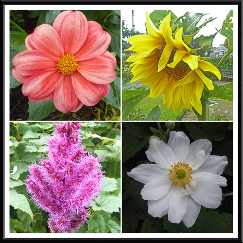 four colourful flowers august