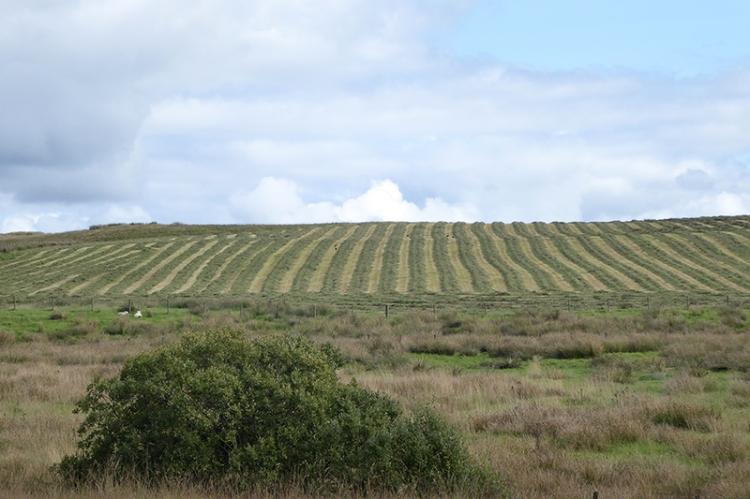 grass cutting in field