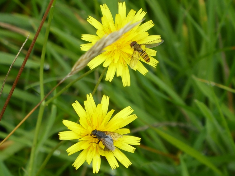 insects on wildflowers