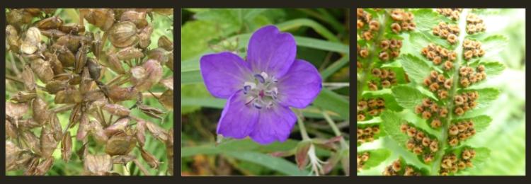 irvine house wild plants