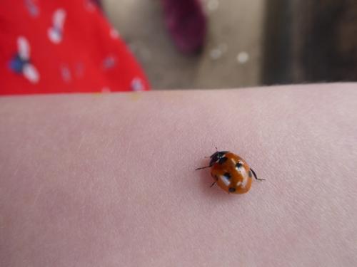 ladybird portobello