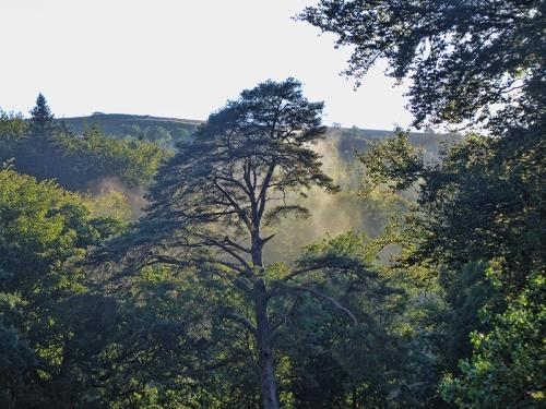 misty tree view