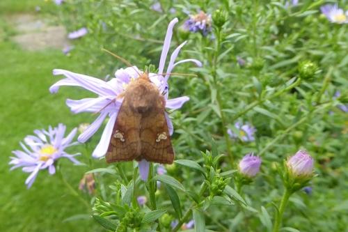 moth's back