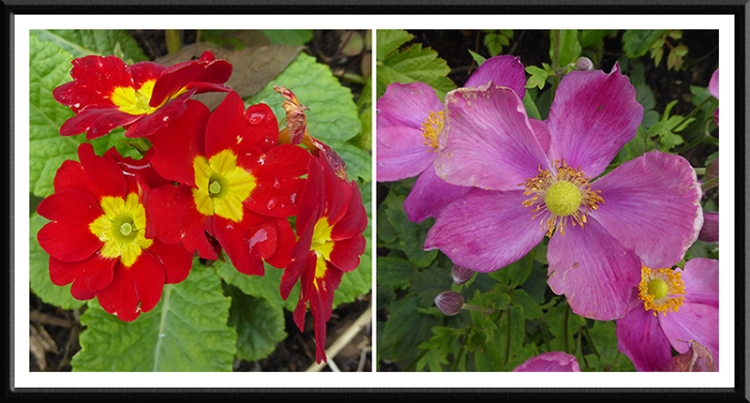 pansy and anemone