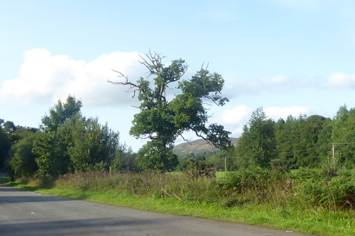 poodle tree