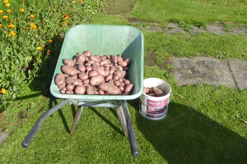 potatoes in barrow