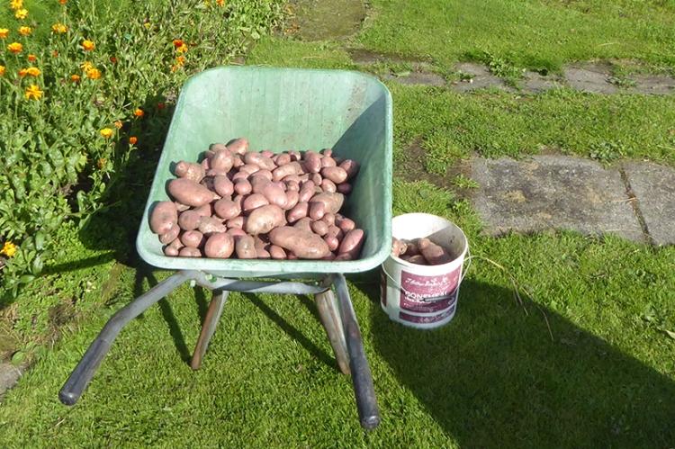 potatoes in barrow