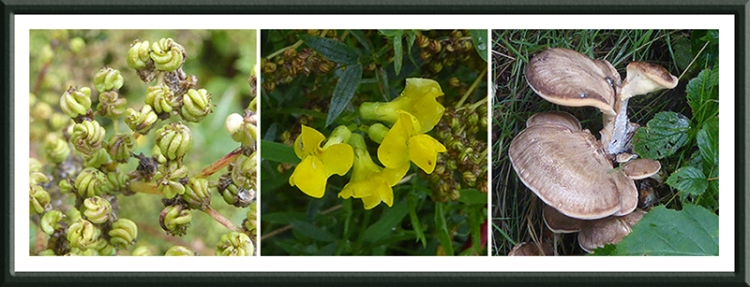 seed heads, vetch and fungus