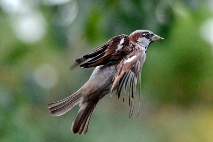 twisted flying sparrow