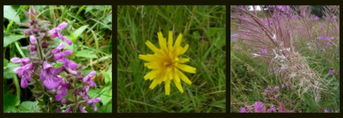 wauchope wild flowers