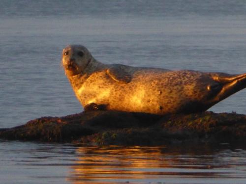 wemyss seal