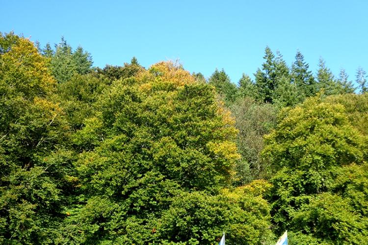 autumn colour at show