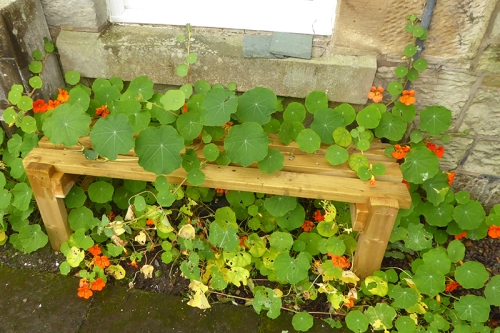 bench with nasturtiums