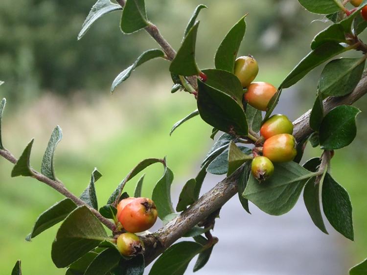 branch across path