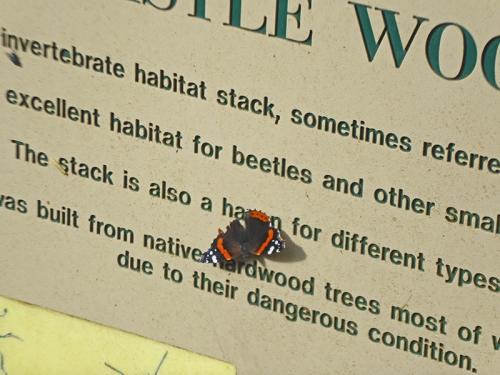 caerlaverock butterfly