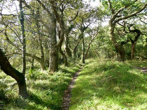 caerlaverock wood walk