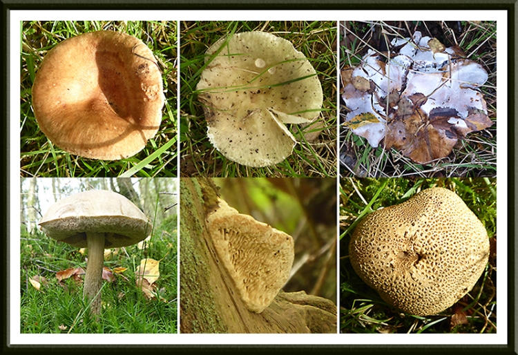dix fungi