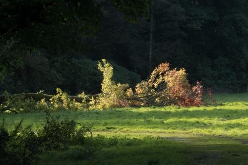 fallen tree castleholm
