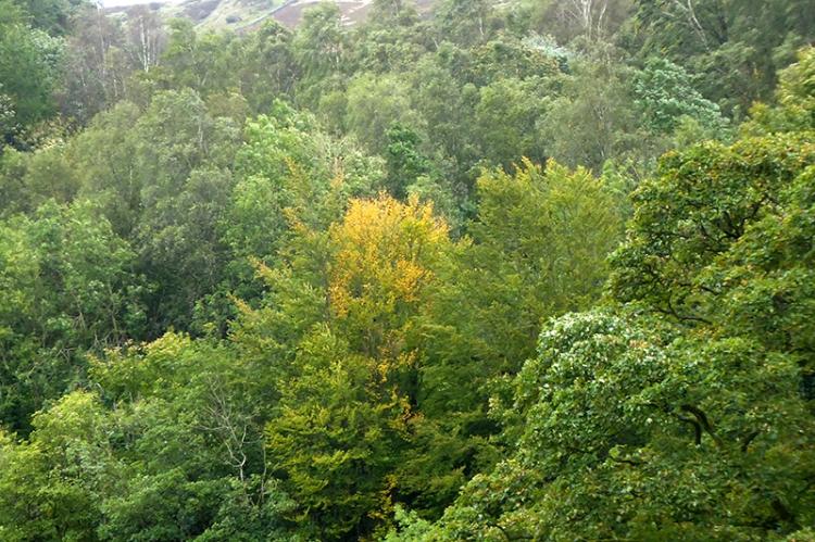 fist autumn colour