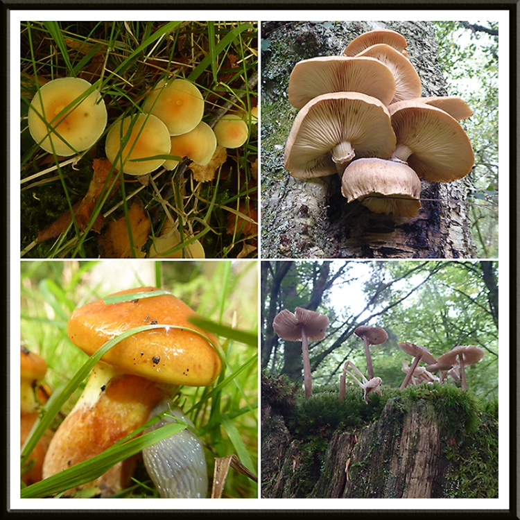 four fungi