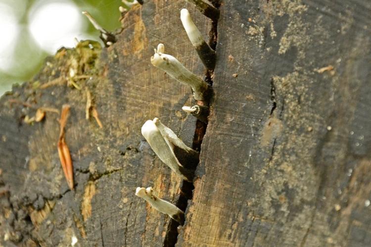 fungsu on tree stump