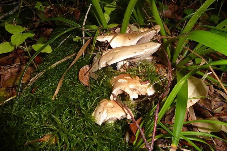 fungus 2