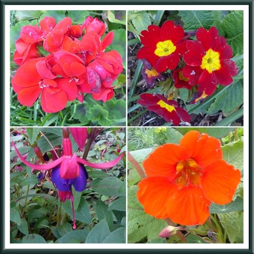 garden flowers 24 Sept (2)