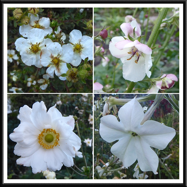 garden flowers 24 Sept (3)