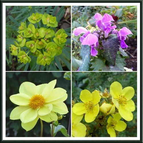 garden flowers 24 Sept