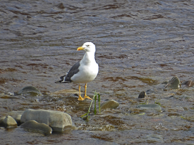 gull beside river