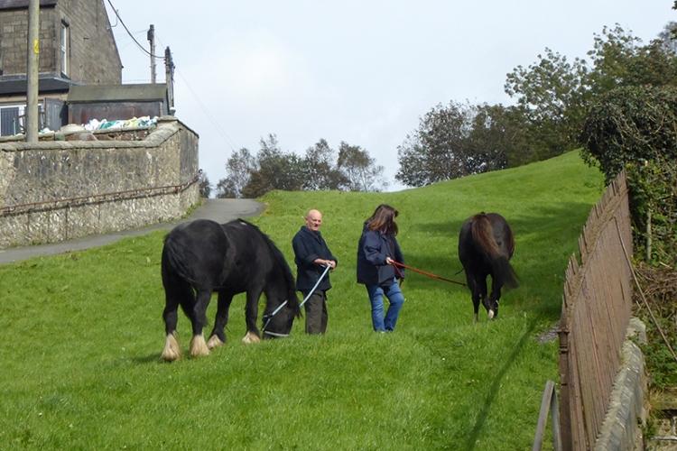 horse on Kirk Wynd