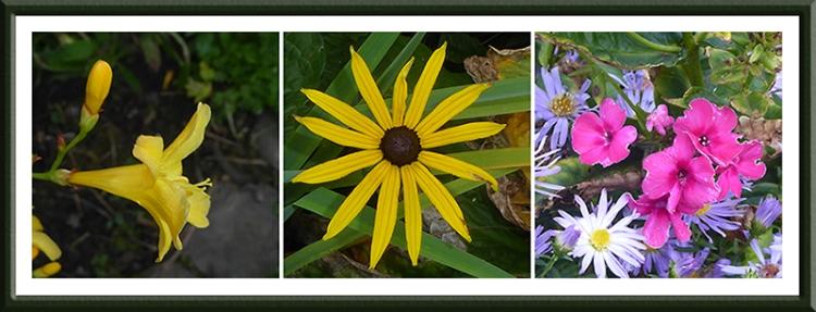 late september flowers