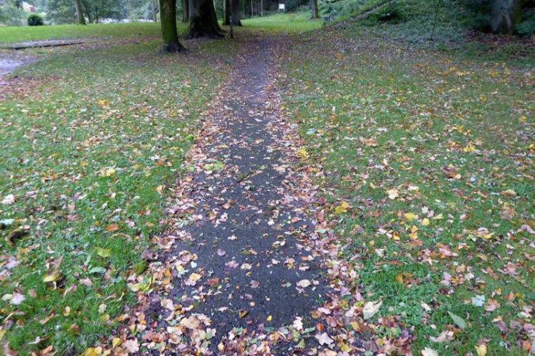 leafy path in park
