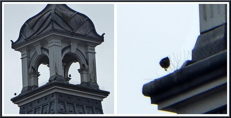 Lockerbie town hall with birds