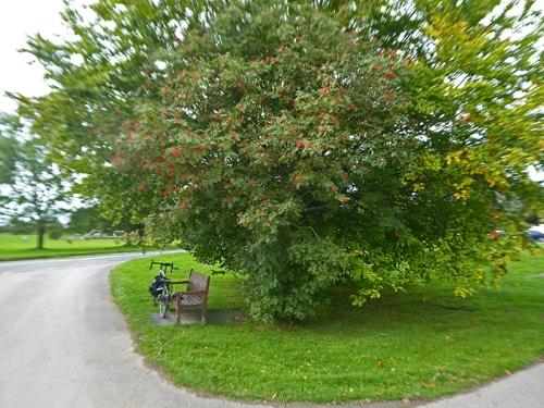 newtown bench and bike