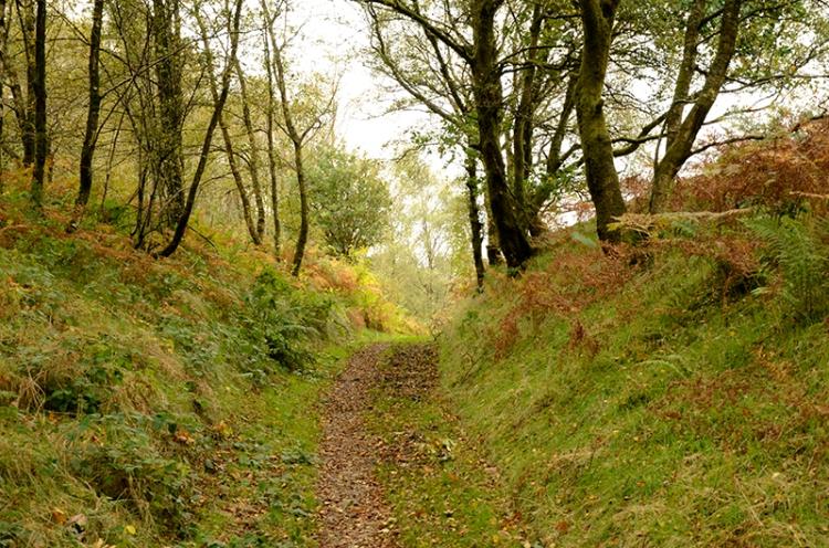 oak wood path