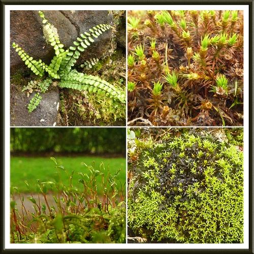 park wall moss