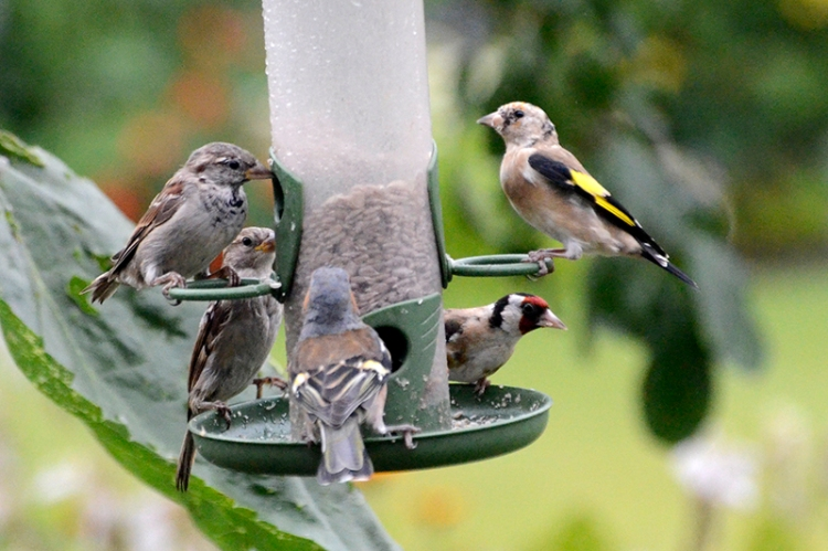 peaceful feeder