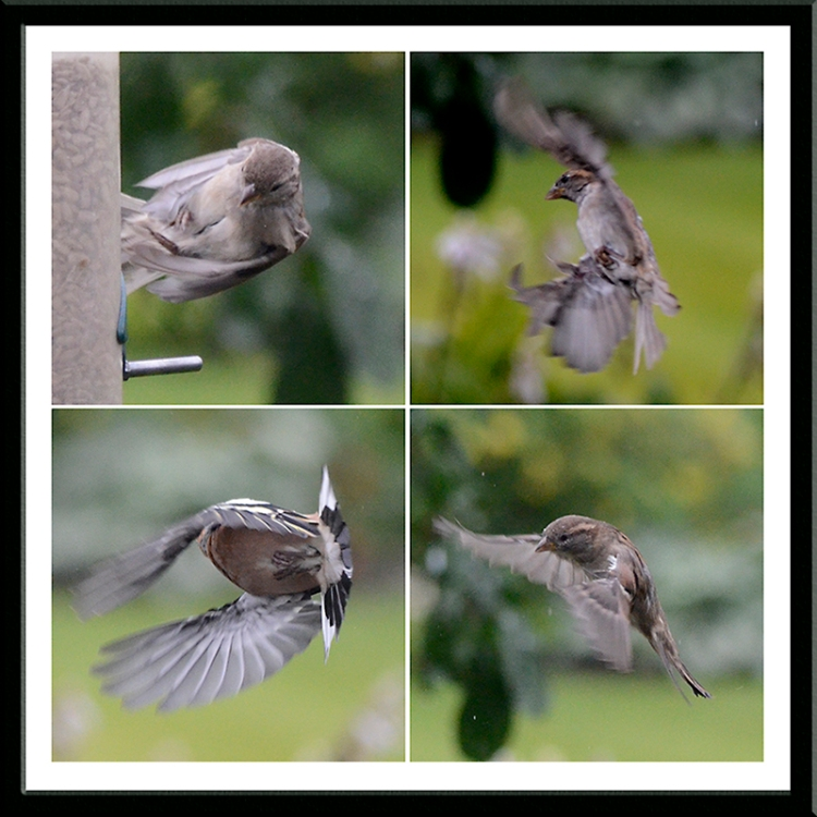 sideways birds