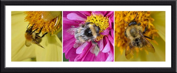 three bees on flowers