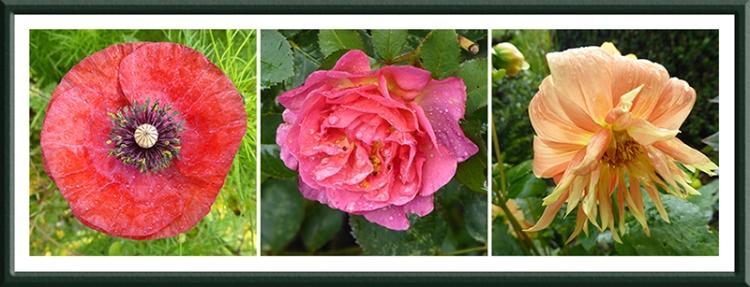 three wet flowers