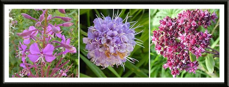 three wild flowers