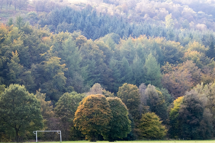 Trees from castleholm