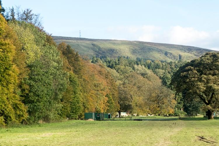 trees on back of Lodge walks