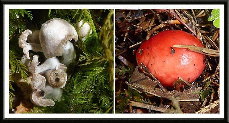 two fungi