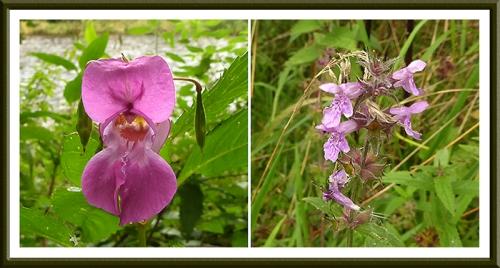 wild flowers beside esk