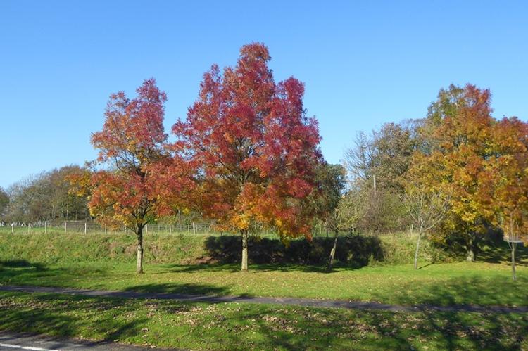 autumn colour ecclefechan