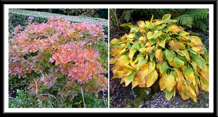 autumn colour in the garden