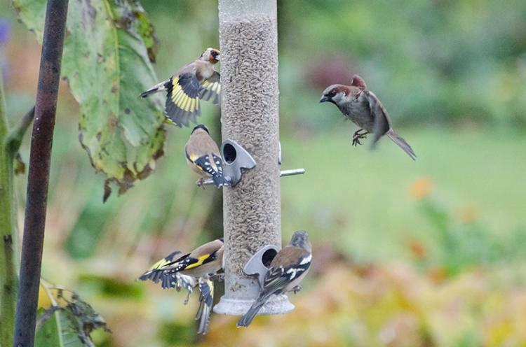 busy feeder oct 18