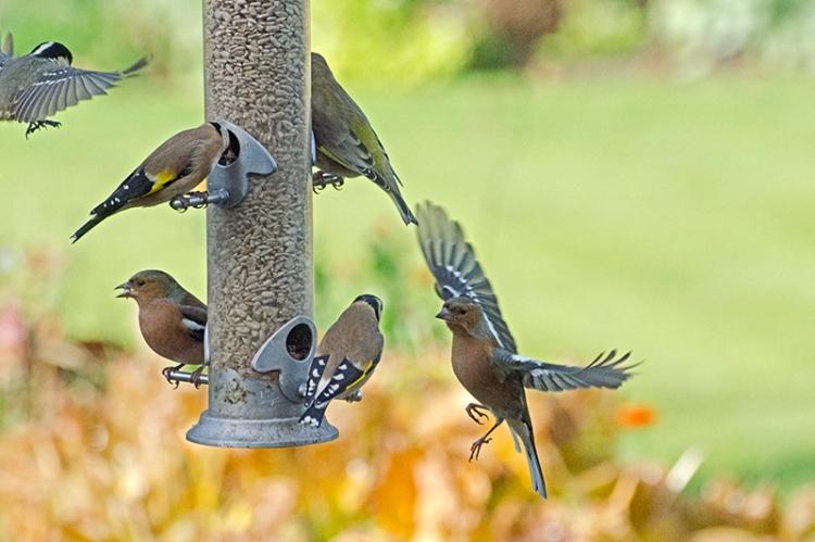 busy feeder oct 26